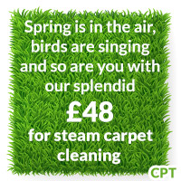 Pay Less for Steam Carpet Cleaning in Kingston